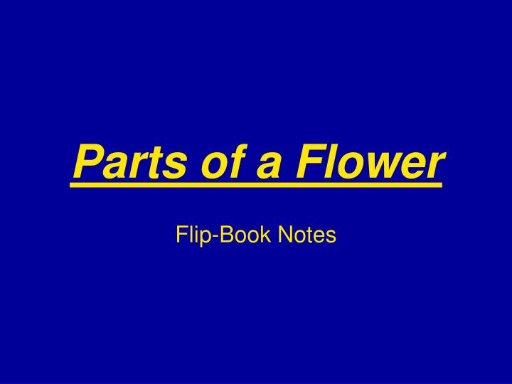 parts of a flower n.
