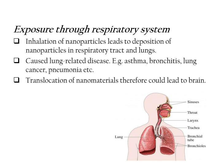Exposure through respiratory system