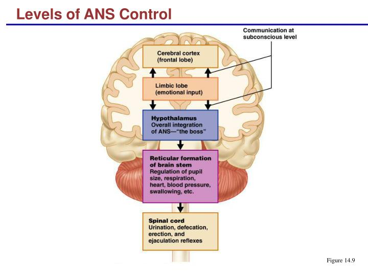 Levels of ANS Control