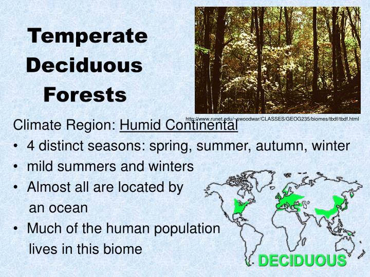 blue planet biomes deciduous forest