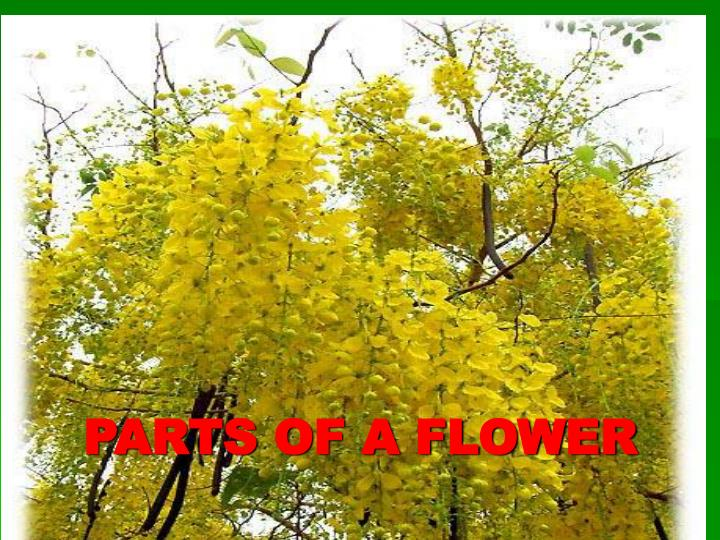 PPT - PARTS OF A FLOWER PowerPoint Presentation, free ...