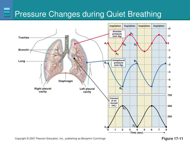 Pressure Changes during Quiet Breathing