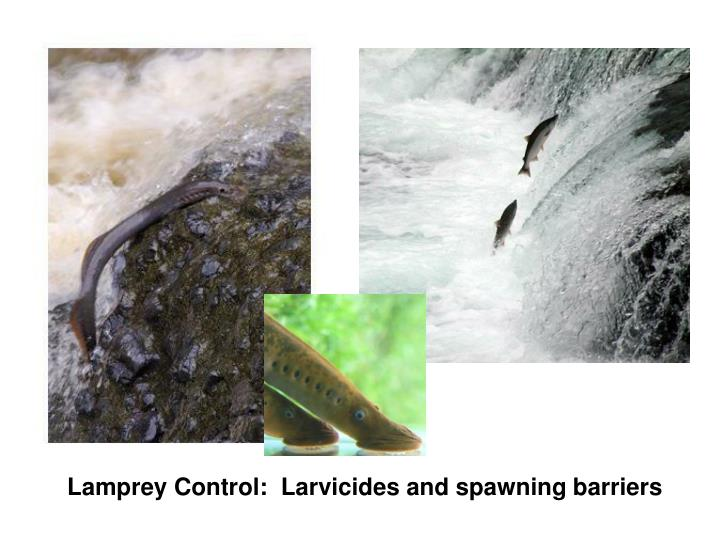 Lamprey Control:  Larvicides and spawning barriers
