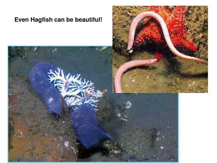 Even Hagfish can be beautiful!