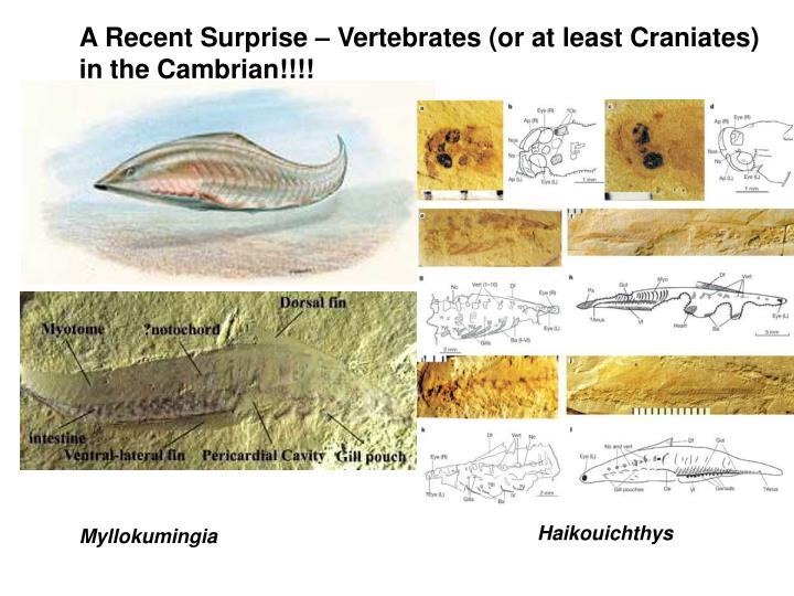 A Recent Surprise – Vertebrates (or at least Craniates)