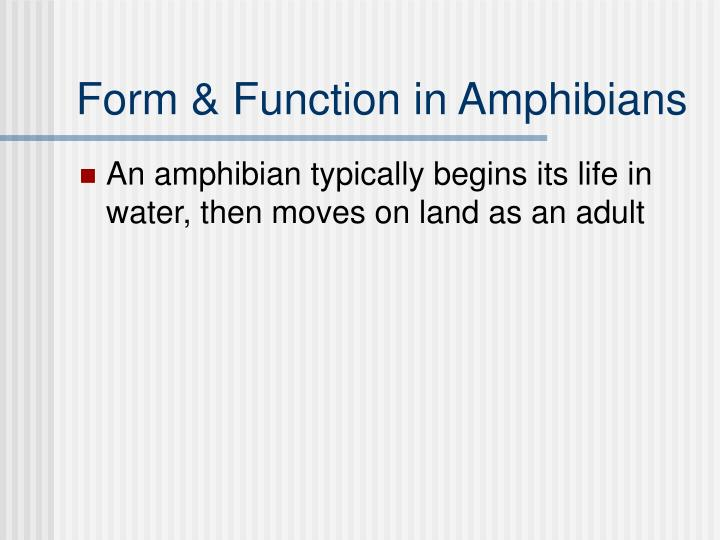 Form & Function in Amphibians