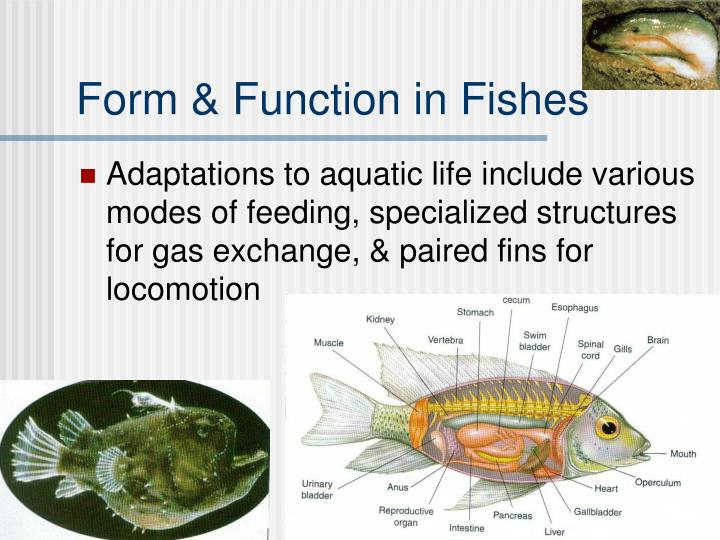 Form & Function in Fishes