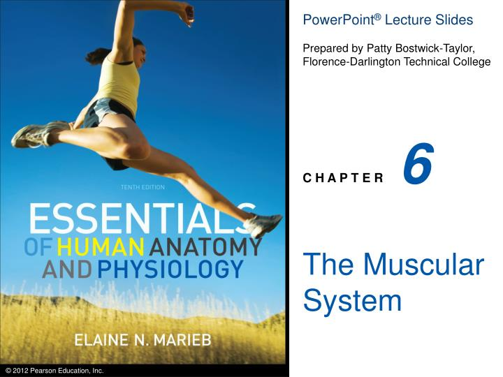 PPT The Muscular System PowerPoint Presentation ID 3099518