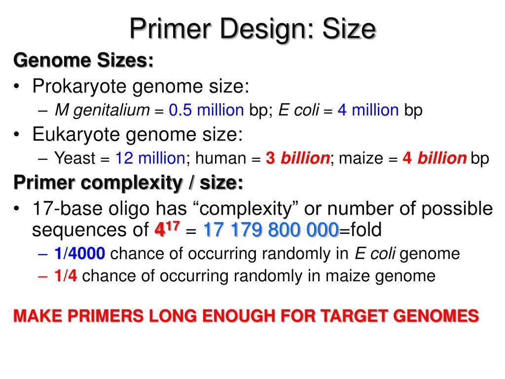 Ppt Primer Design Size Powerpoint Presentation Free Download Id 3099798