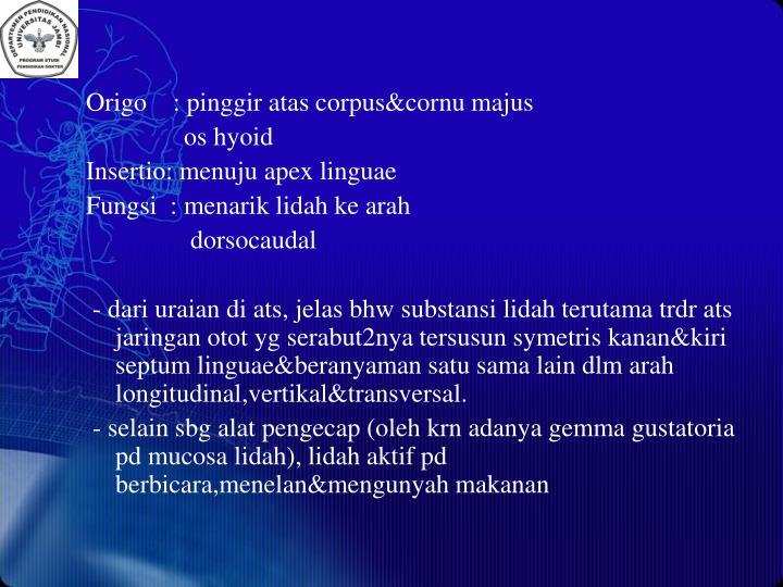 Origo    : pinggir atas corpus&cornu majus