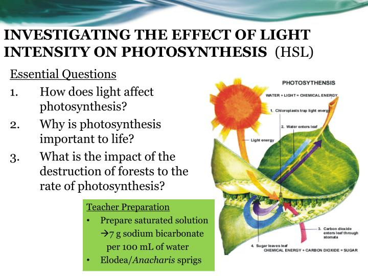the effect of light intensity can affect the rate of photosynthesis To investigate the effect of light intensity on the rate of photosynthesis what is the effect of light intensity on the rate of photosynthesis.