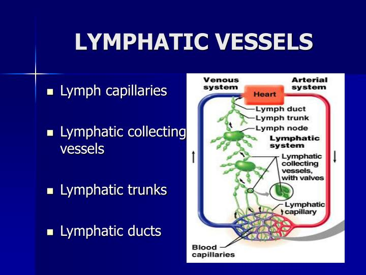 Ppt Lymphatic System Powerpoint Presentation Id3101214