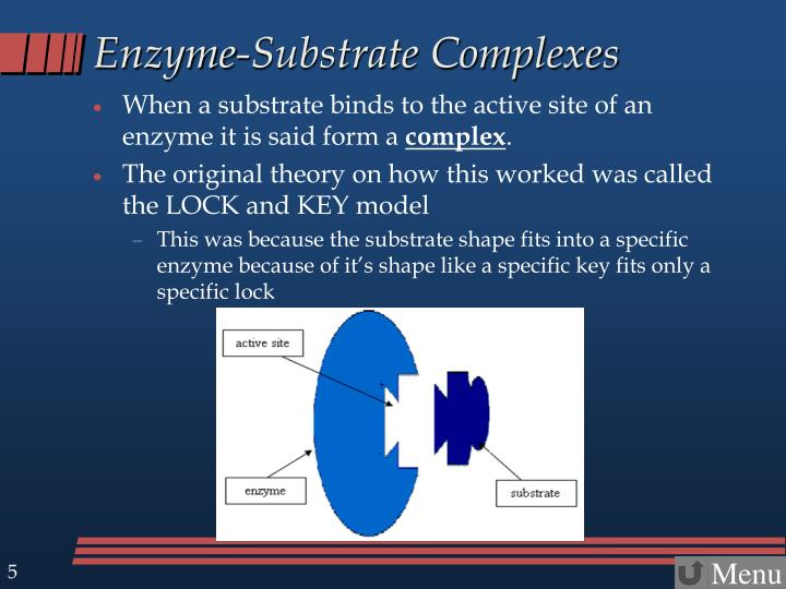 Enzyme-Substrate Complexes