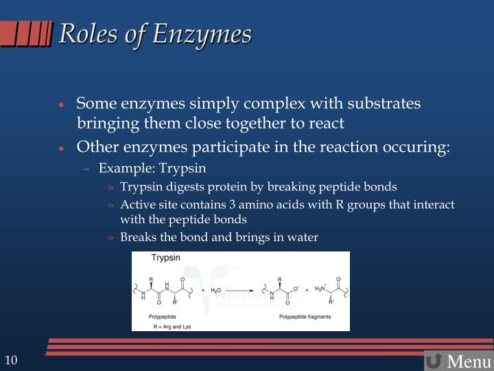 Roles of Enzymes