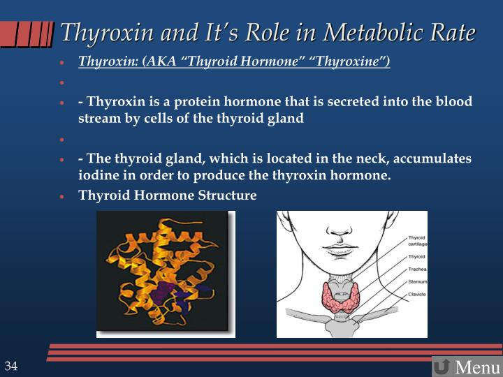 Thyroxin and It's Role in Metabolic Rate