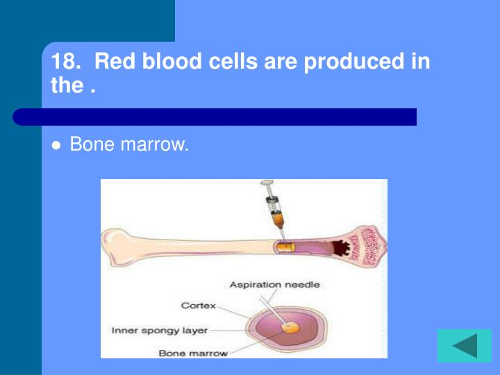 18.  Red blood cells are produced in the .