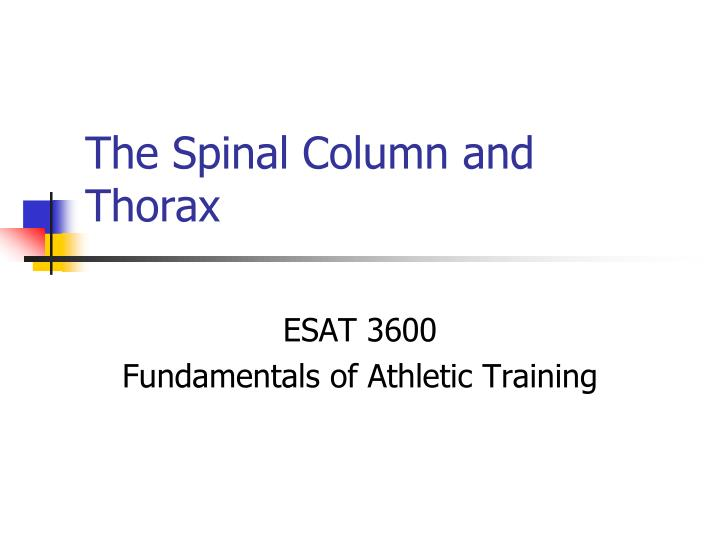 the spinal column and thorax n.