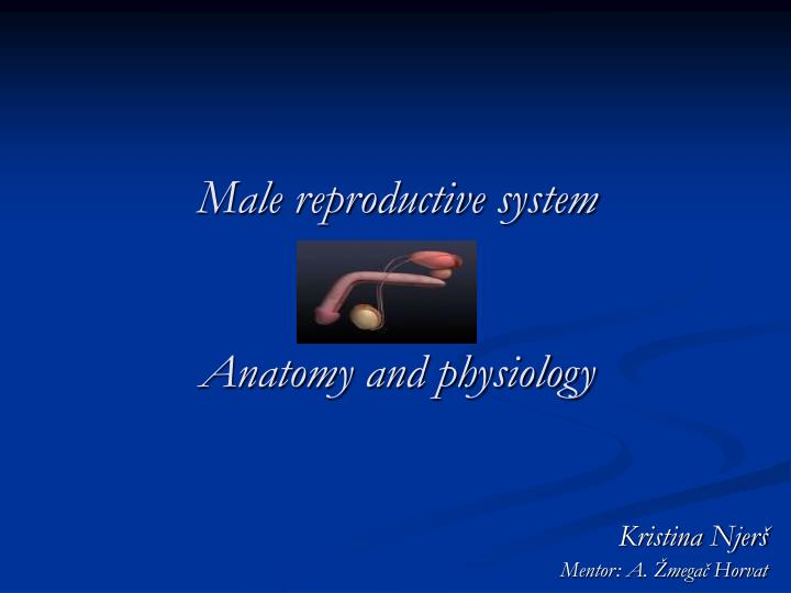 PPT - Male reproductive system Anatomy and physiology PowerPoint ...