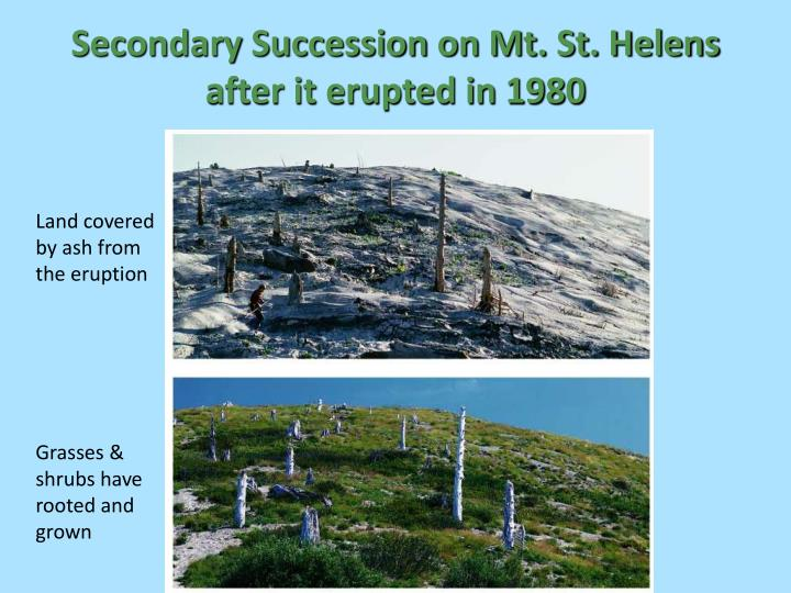 mount saint helens and ecological succession