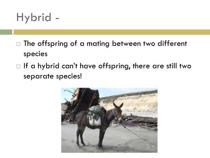 Hybrid -