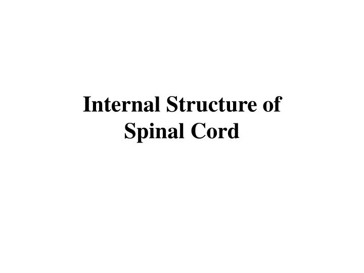 internal structure of spinal cord n.