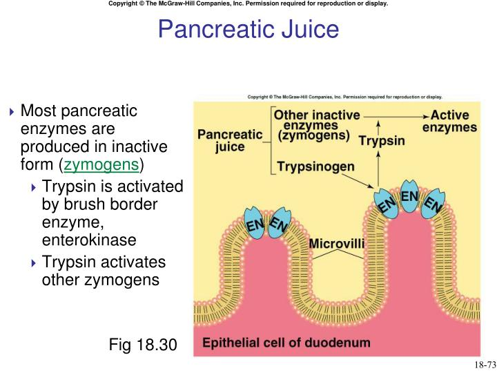 Pancreatic Juice