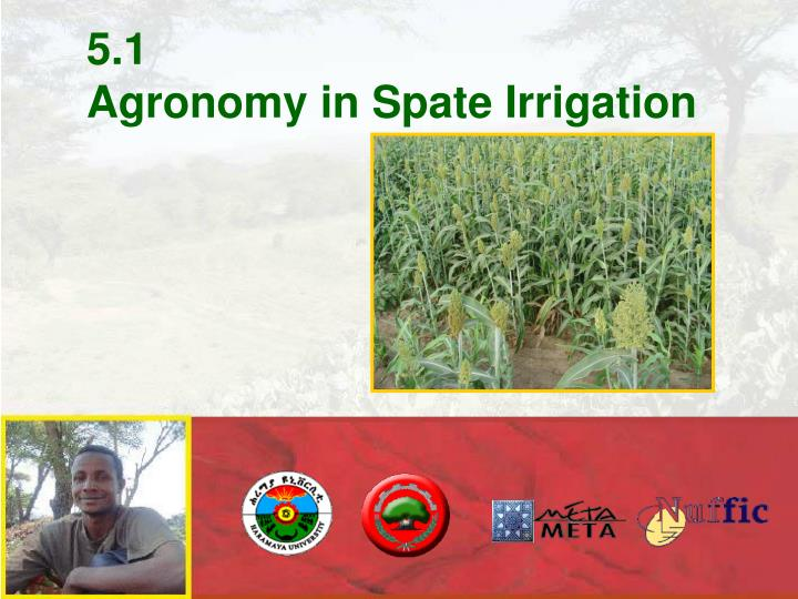 5 1 agronomy in spate irrigation n.