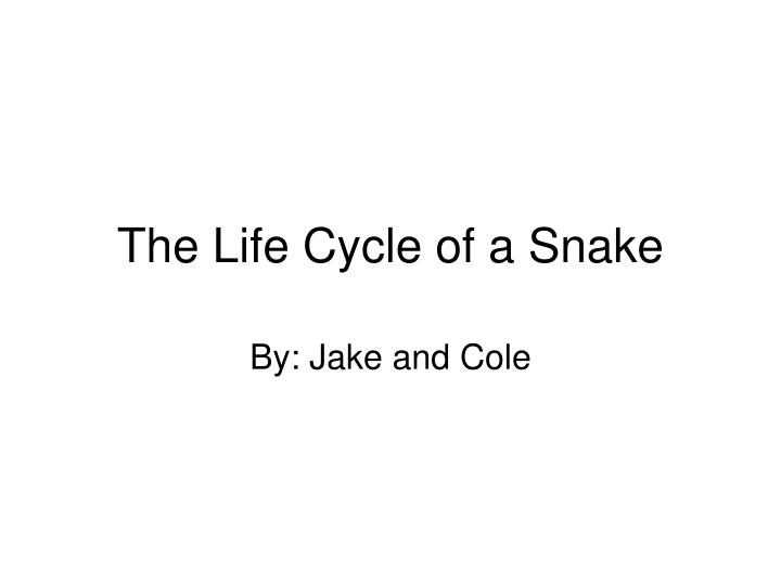 the life cycle of a snake n.