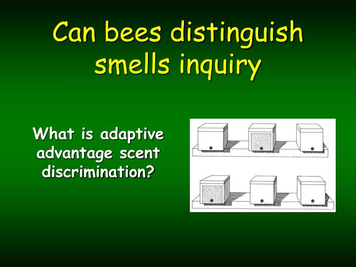 can bees distinguish smells inquiry n.