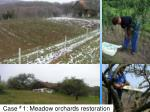 case 1 meadow orchards restoration