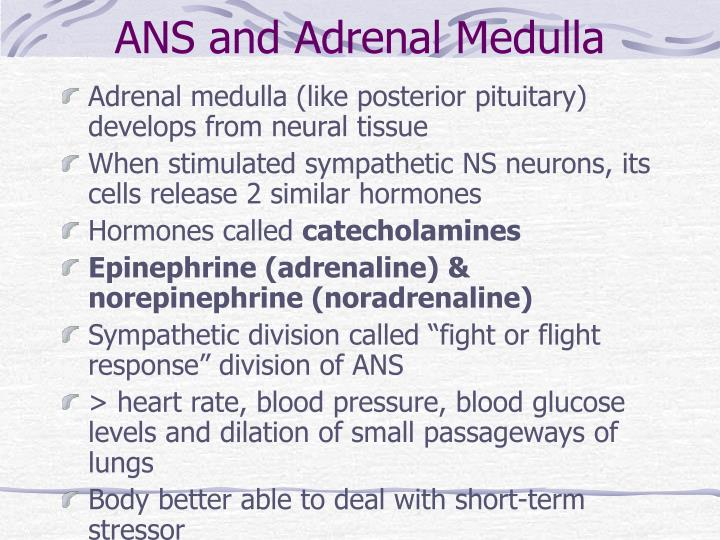 ANS and Adrenal Medulla