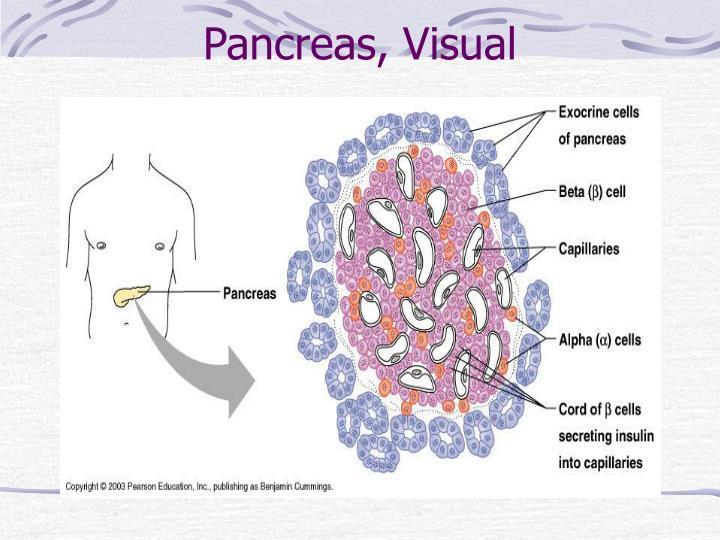 Pancreas, Visual
