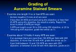 grading of auramine stained smears