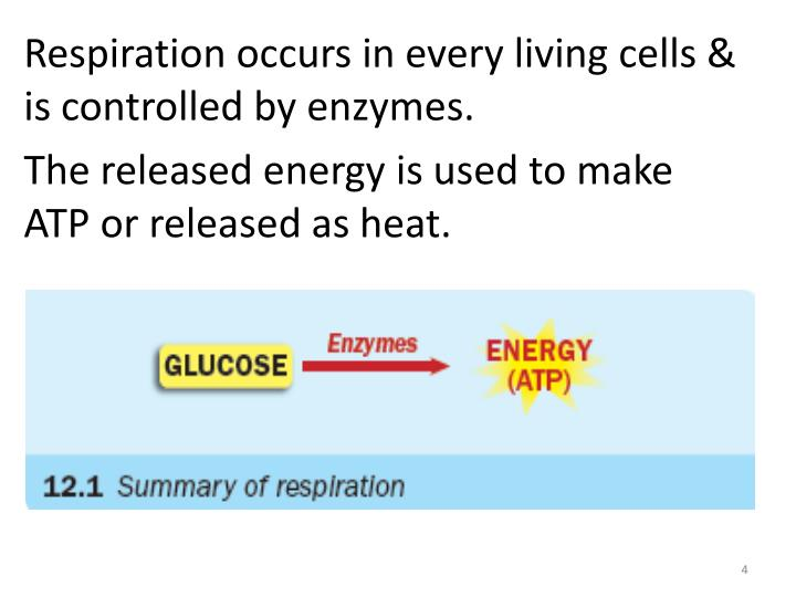 Respiration occurs in every living cells &