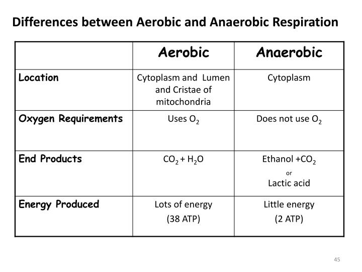 Differences between Aerobic and Anaerobic Respiration