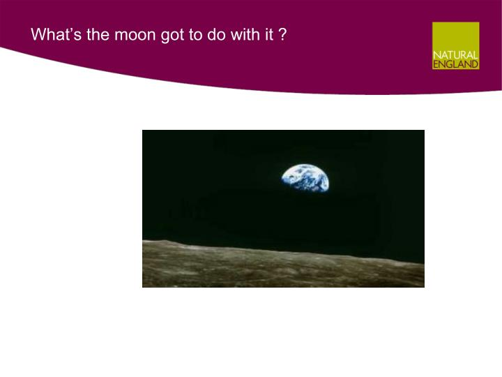 What s the moon got to do with it