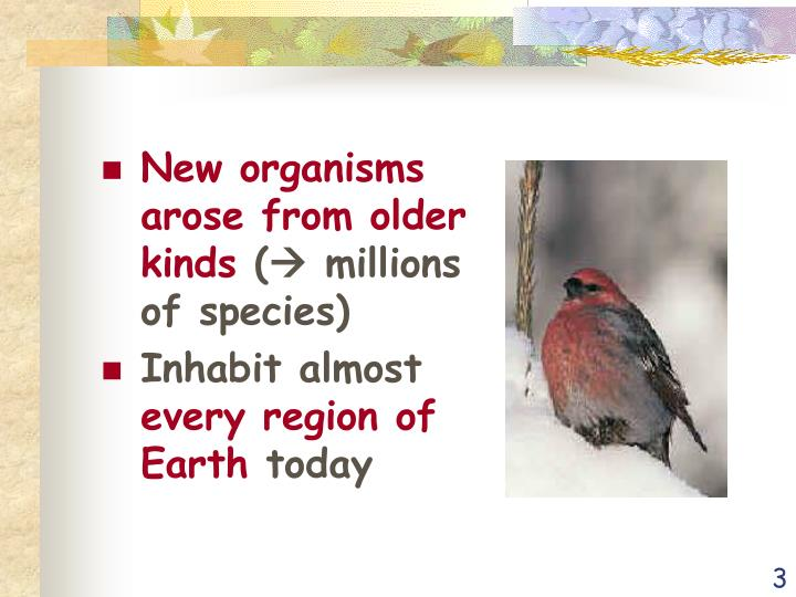 New organisms arose from older kinds