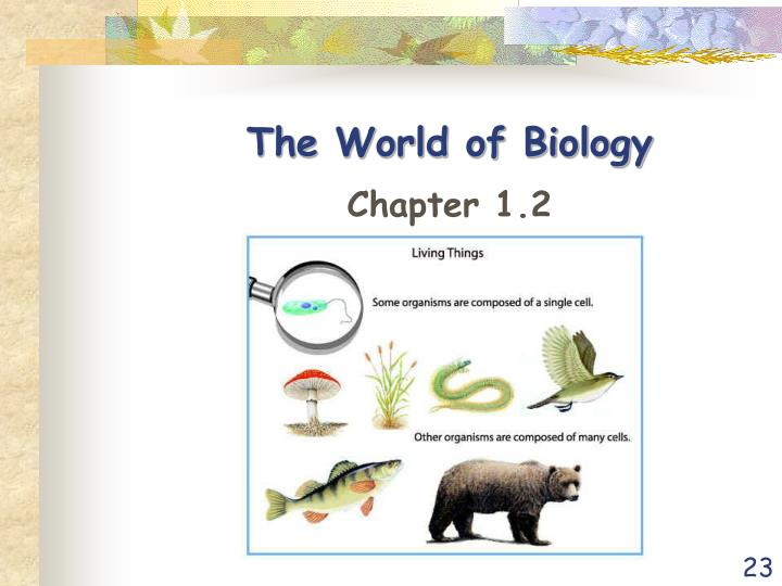 The World of Biology