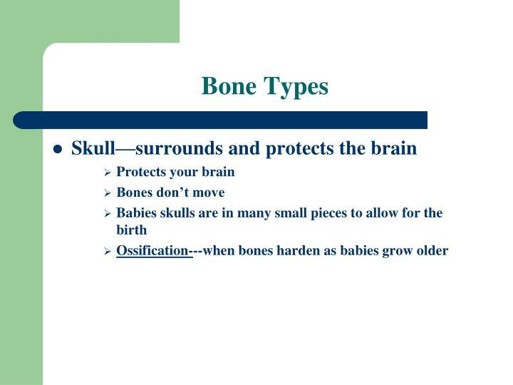 Bone Types