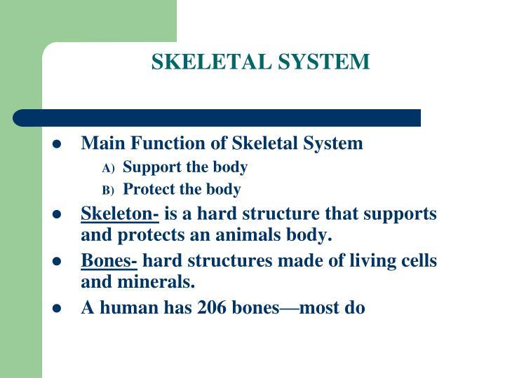 Skeletal system1