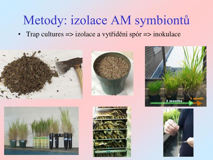 Metody: izolace AM symbiontů