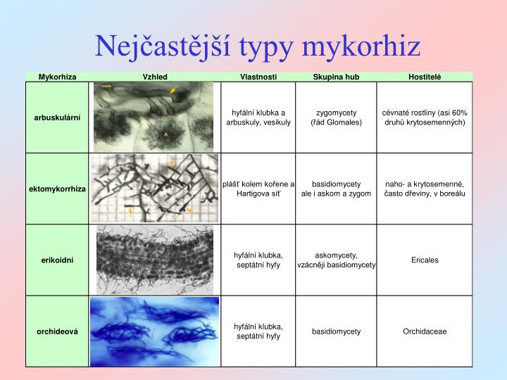 Nej ast j typy mykorhiz