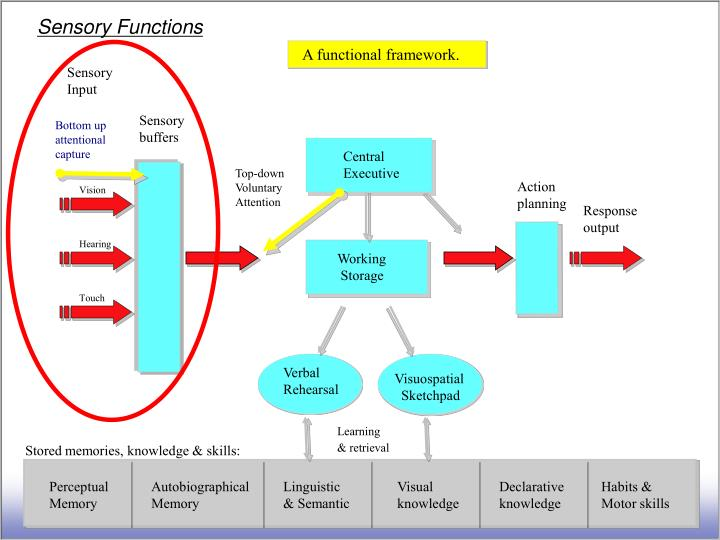 Sensory Functions