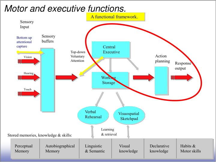 Motor and executive functions.