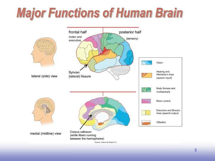 Major Functions of Human Brain