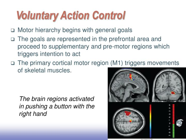 Voluntary Action Control