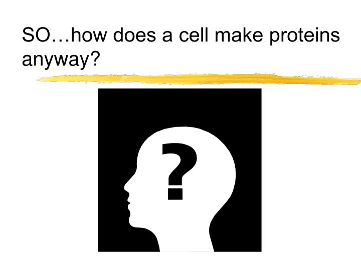 SO…how does a cell make proteins anyway?