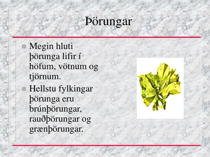 Rungar2