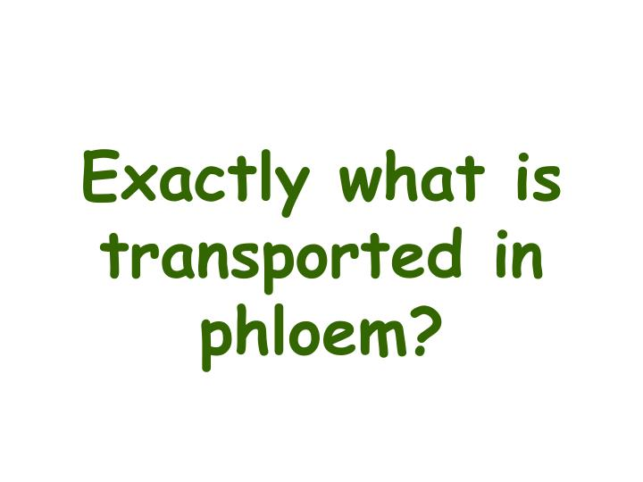 Exactly what is transported in phloem?