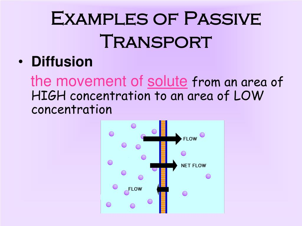 PPT - The Cell Membrane PowerPoint Presentation, free ...  Example Of Passive Transport